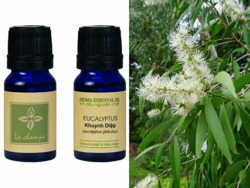 Tinh dầu Khuynh Diệp Eucalyptus Globulus Oil...